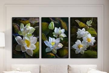 Cảm hứng với 20 mẫu tranh bộ hoa sen tuyệt đẹp