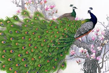 Chim công trong phong thủy