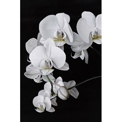 Tranh hoa đen trắng dọc 1
