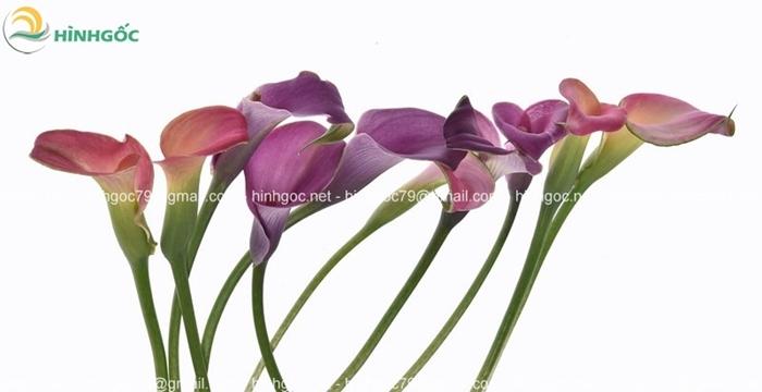 Hình bông hoa PMP-01(102)