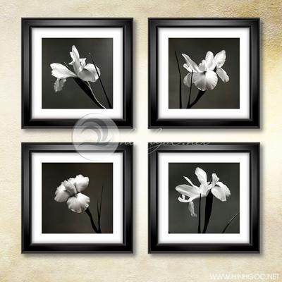Bộ hoa đen trắng - TT229