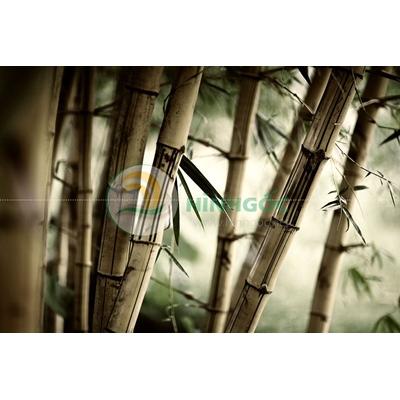 Hình ảnh phong cảnh cây tre làng quê-imagestock-0209