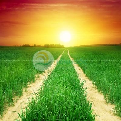 Hình ảnh làng quê cánh đồng lúa xanh bát ngát-imagestock-0671